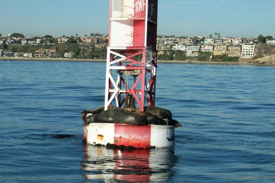 Newport Landing Whale Watching: Sunbathing seals
