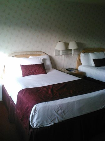 Svendsgaard's Lodge - Americas Best Value Inn: Another shot of the beds