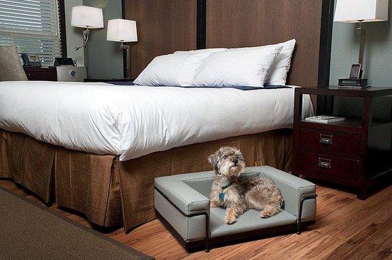 Centro Motel: Pet Friendly Rooms