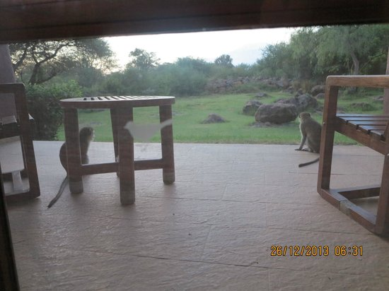 Amboseli Serena Safari Lodge: Morning guests