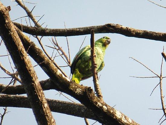 Bucus Tours: Beautiful parrot