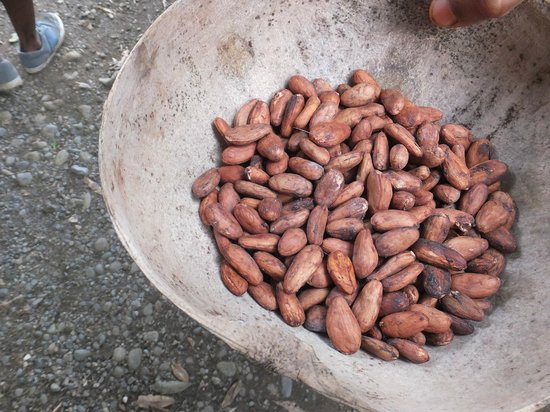Bucus Tours: dried cacao beans
