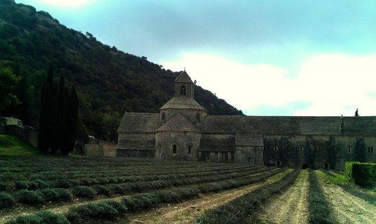 Abbaye Notre-Dame de Sénanque : Небольшое лавандовое поле в аббатстве Сенанк