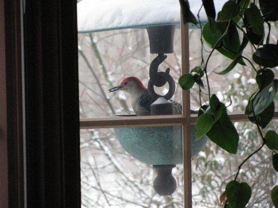 Robinwood Inn: Great bird watching