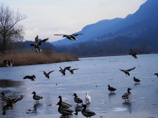 Carlazzo, Italy: lago giacciato