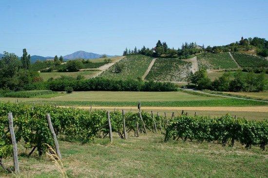 Province of Alessandria, Italien: Paesaggio Provincia di Alessandria- le vigne tra Lerma e Tagliolo Monferrato