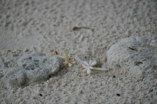 Nikoi Island : Beach sand