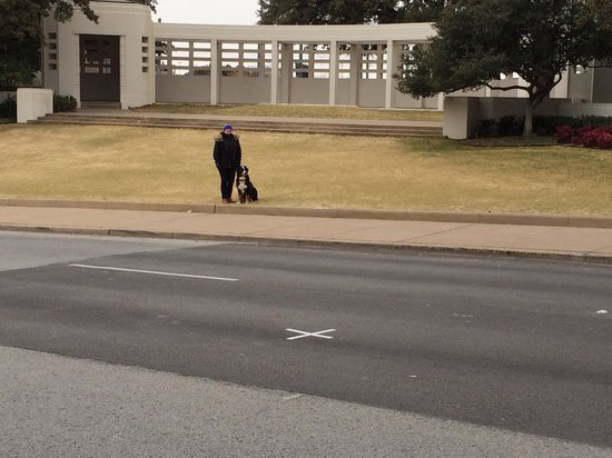 Dealey Plaza National Historic Landmark District : On a cold winter day my dog was mesmerized by the X in the road