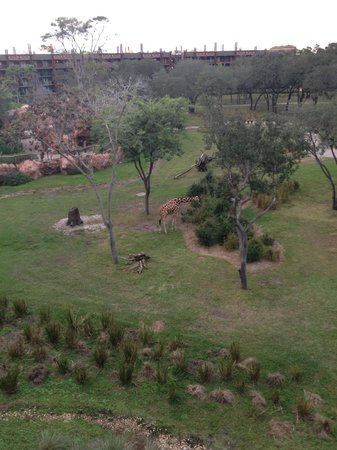 Disney's Animal Kingdom Lodge : Animal View from our Room