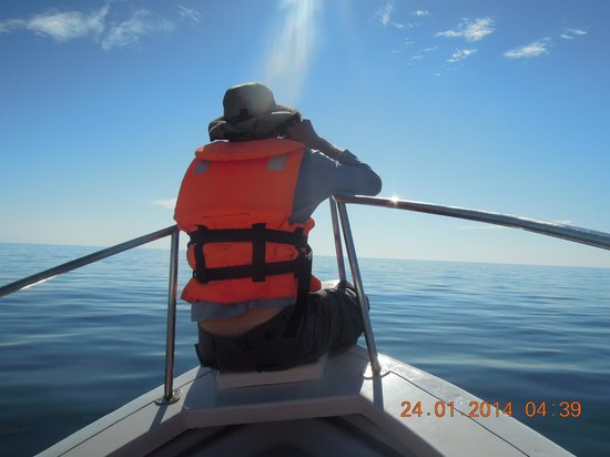 Onca Explorations: He thought he could find a whale!!!