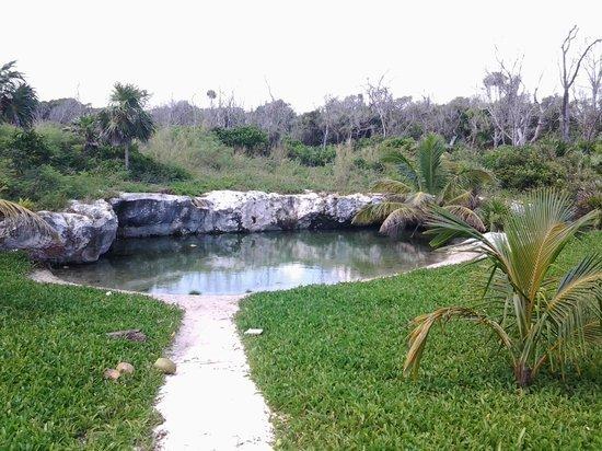 Caleta Tankah: Cenote Natural