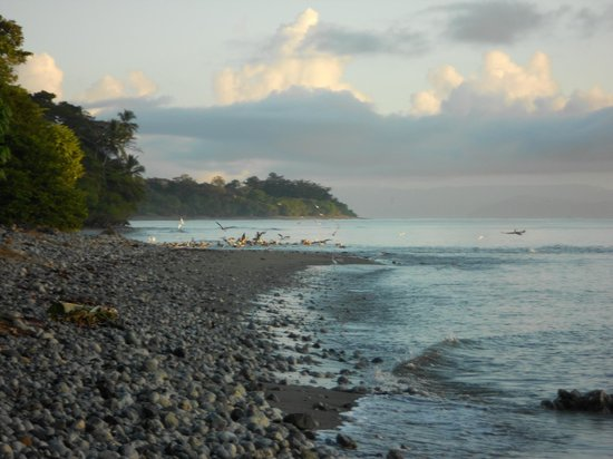 Ojo del Mar: The beach on Golfo Dulce