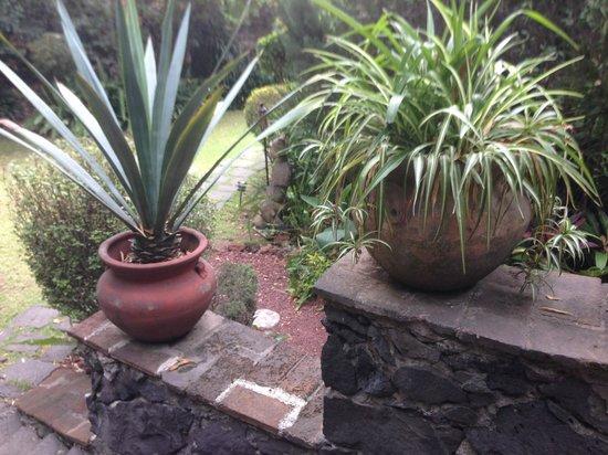 Casa Piedra Bed & Breakfast: lovely garden