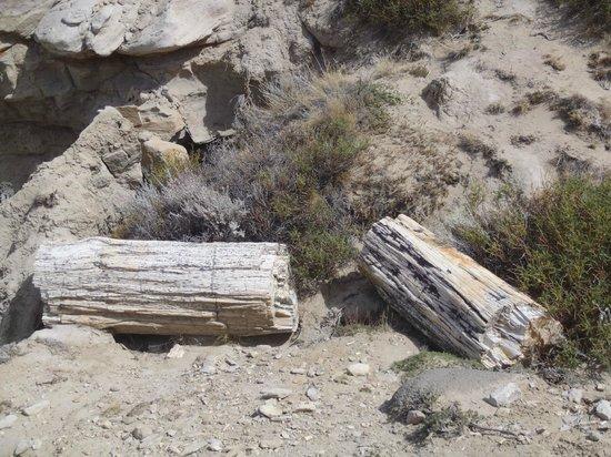 Bosque Petrificado La Leona: trozos de troncos petrificados