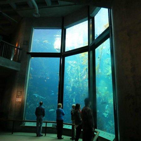 Monterey Bay Aquarium: Aquarium