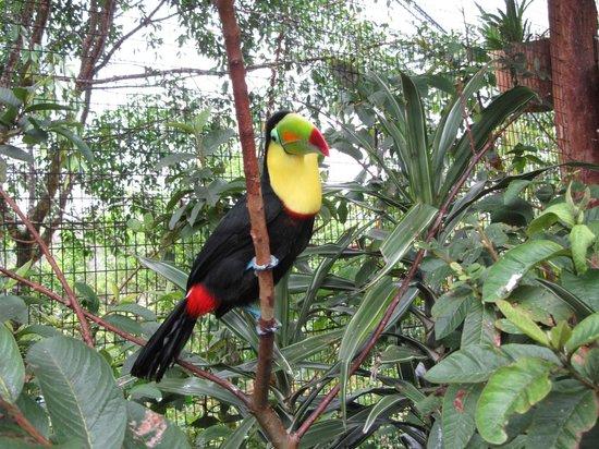 Jaco Tours & Sportfishing: Toucan