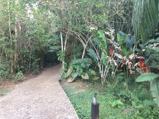 Inkaterra Hacienda Concepcion : Path to the cabana