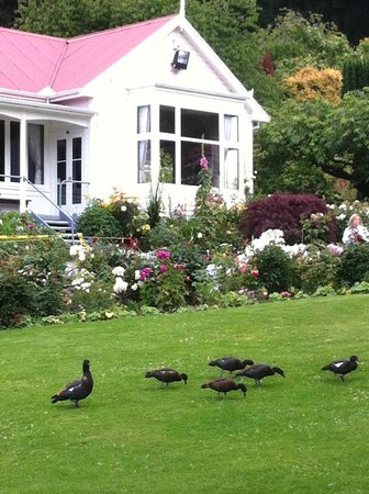 Walter Peak Evening Dining Excursions - Real Journeys: Garden birds