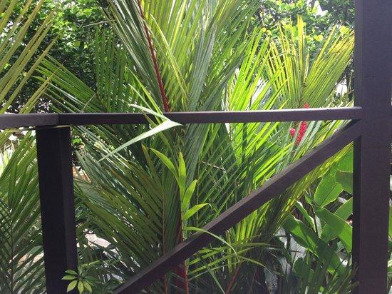 Rio Celeste Hideaway Hotel : View.