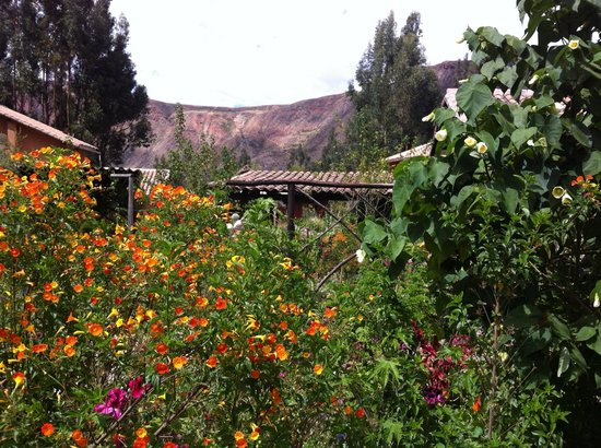 Casa Colibri eco-Lodge: The humming bird garden.