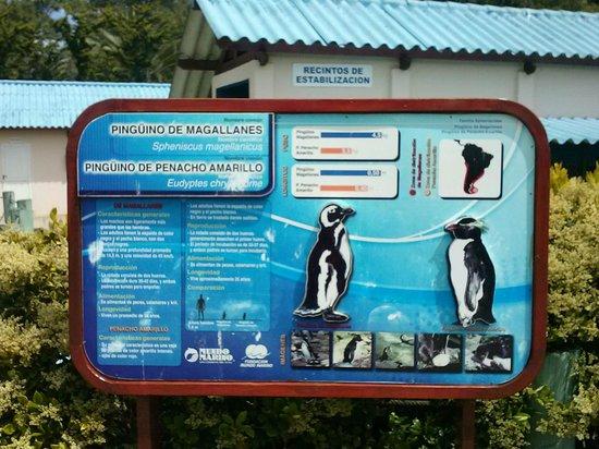 Mundo Marino: PINGUINOS