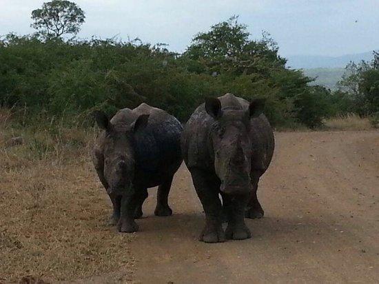 Monzi Safaris: Op enkele meters afstand van de auto ineens deze neushoorns