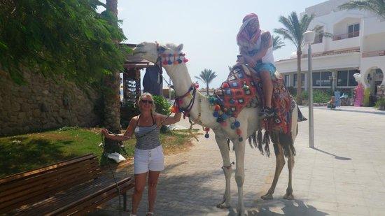 Baron Resort Sharm El Sheikh : camel ride