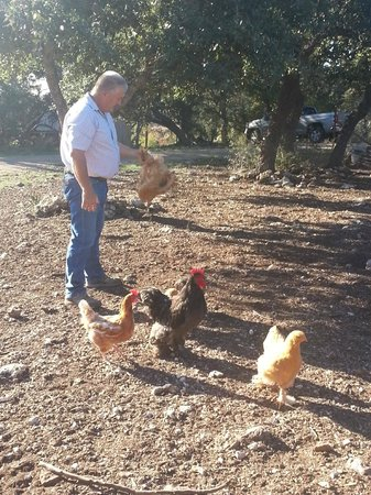 Walnut Canyon Guest Cabins: David and Chickens