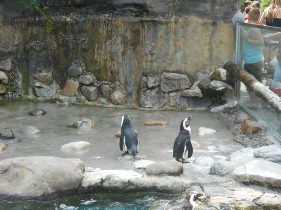 Turtle Back Zoo : penguins