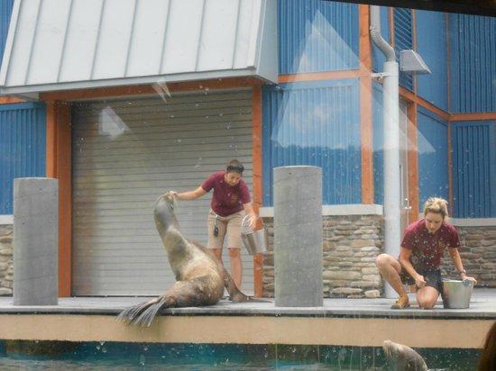Turtle Back Zoo: aquarium area