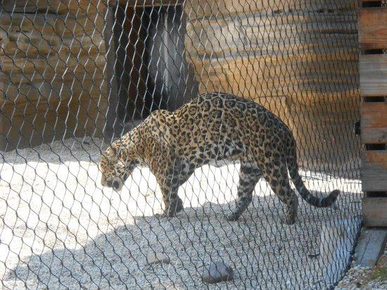 Turtle Back Zoo: cheetah