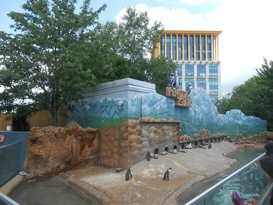 Adventure Aquarium: outside for penguin island