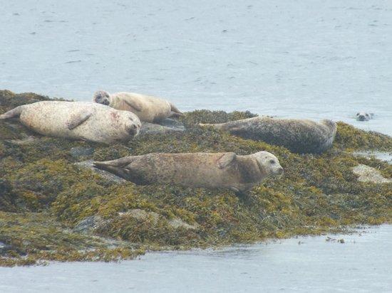 Sea Life Surveys : Some sunbathing seals