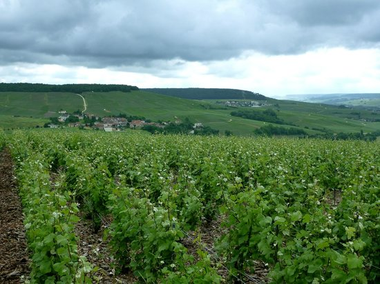 O Chateau - Wine Tasting: french countryside