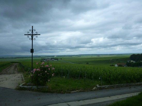 O Chateau - Wine Tasting: penet chardonnet cross