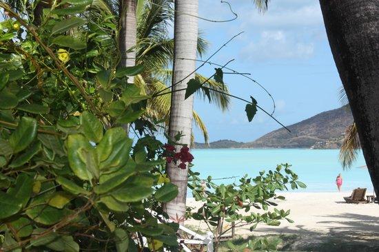 Antigua Rainforest Canopy Tour: Beautiful Antigua
