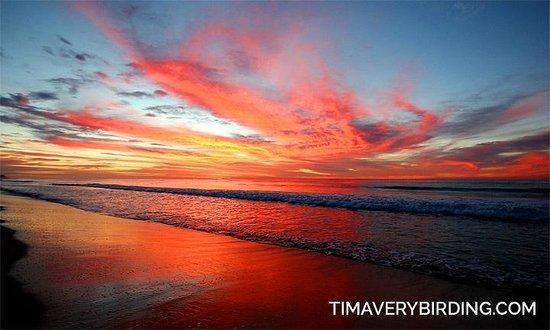 Royal Solaris Los Cabos: Sunrise on the beach!