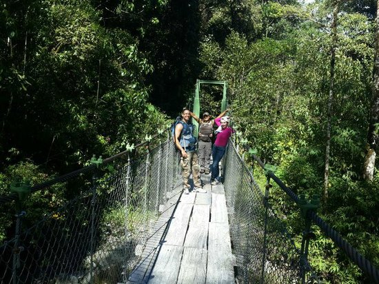 Sendero Los Quetzales (The Quetzales Trail): Puente en el camino