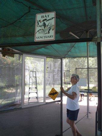 The Bat Hospital Visitor Centre: Bat sanctuary
