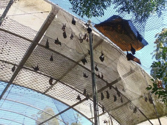 The Bat Hospital Visitor Centre : Lofty heights