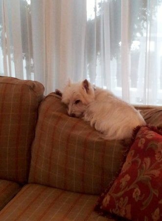 """The Victoria Inn : Lincoln, the resident """"guard dog"""""""