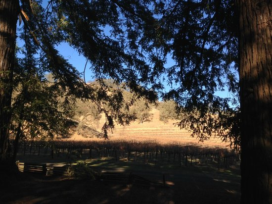 Nelson Family Vineyards: View from under the redwood grove