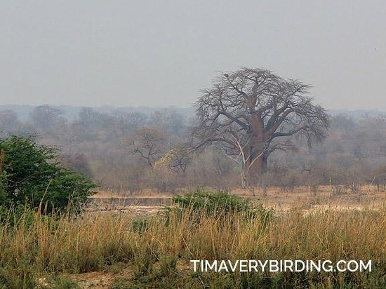 Bushbuck River House: Baobab across the river
