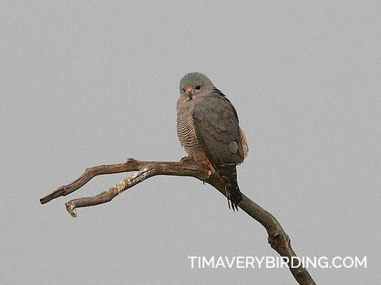 Bushbuck River House: Lizzard Buzzard on the river