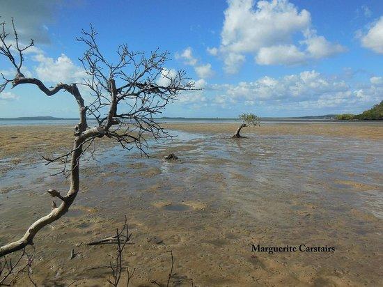 Kingfisher Bay Resort: Mangroves on a free ranger walk