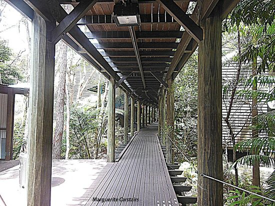 Kingfisher Bay Resort: wooden walking paths to the rooms
