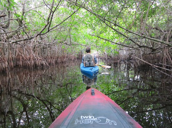 Tour the Glades: Mangrove 'tunnels'