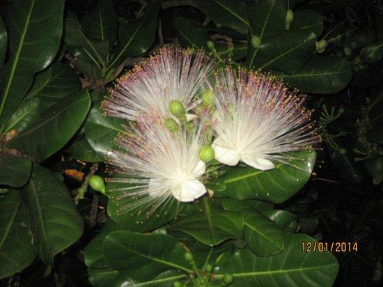 Citrus Hikkaduwa: SchattenspendendeBäume