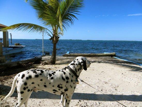 Seafarer Resort and Beach : Day on the beach