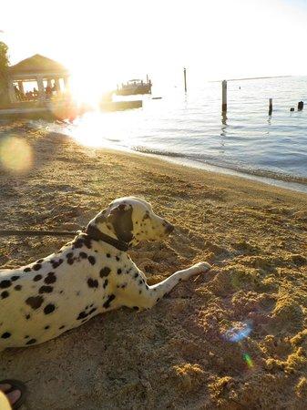 Seafarer Resort and Beach: Dog friendly beach